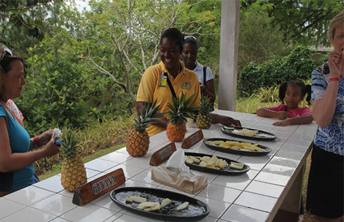 Croydon Plantation Tour from Montego Bay