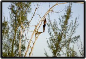 Discovery Falls Canopy Tour - Silver Spring - Jamaica